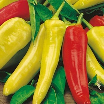 Chilli Pepper Hungarian Hot Wax Plants
