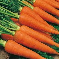 Carrot Cortina F1 Seeds