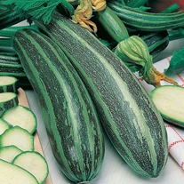 Marrow Long Green Bush 2 Seeds