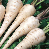 Parsnip White Gem Seeds