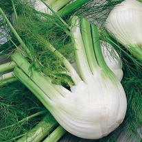 Fennel di Firenze Seeds