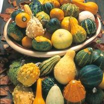 Gourd Ornamental Mixed