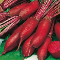 Beetroot Renova Seeds