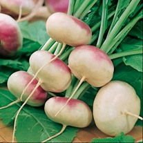 Turnip Purple Top Milan Seeds