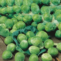 Brussels Sprout Dimitri F1 Seeds