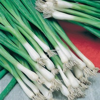 Onion (Spring) Guardsman Seeds
