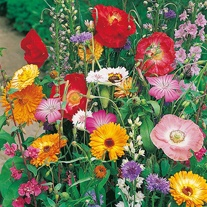 Butterfly World Mixed Annuals Seeds