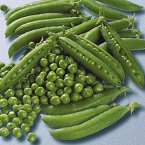Pea Jumbo Seeds
