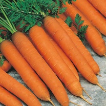 Carrot Romance F1 Seeds