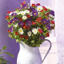 Aster Palette Mixed Seeds