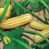 Marrow Sunbeam F1 Seeds