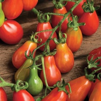 Tomato (Plum/Cherry) Red Pear Seeds