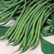 Climbing Bean Marga Seeds