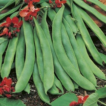 Runner Bean Red Rum Seeds