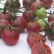 Tomato (Cherry) Chocolate Cherry Seeds