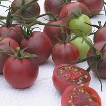 Tomato (Cherry) Chocolate Cherry Seeds