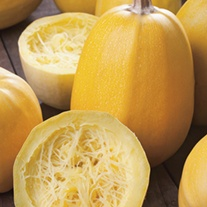 Squash (Winter) Vegetable Spaghetti Seeds