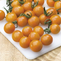 Tomato (Cherry) Orange Paruche F1 Seeds