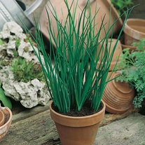 David Domoney, Get Growing Chives