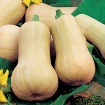 David Domoney, Get Growing Squash Butternut