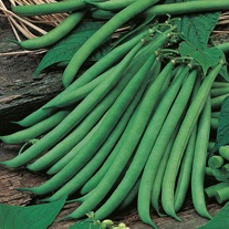 David Domoney, Get Growing Dwarf Bean