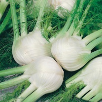 David Domoney, Get Growing Fennel
