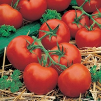 David Domoney, Get Growing Tomato