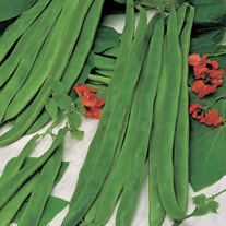 David Domoney, Get Growing Runner Bean