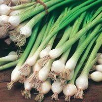 David Domoney, Get Growing Spring Onion White Lisbon