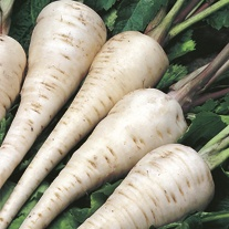 David Domoney, Get Growing Parsnip White Gem