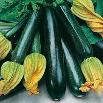 Courgette Black Beauty Vegetable Seeds