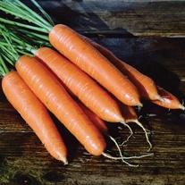 Carrot Eskimo F1 Seeds