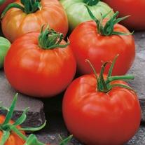 Tomato (Beefsteak) Belle F1 Seeds