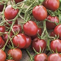 Tomato (Cherry) Black Opal Seeds