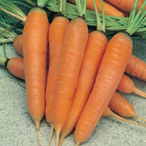 Carrot St Valery Seeds