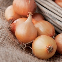 Onion Vento F1 Seeds