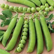 Pea Wando Seeds