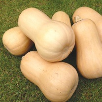 Squash Butternut Walnut F1 Veg Plants