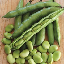 Broad Bean Robin Hood Seeds