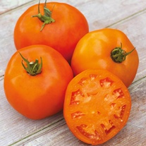 Tomato (Beefsteak) Orange Slice F1 Seeds