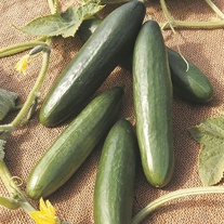 Get Growing Cucumber Seeds