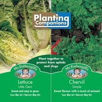 Planting Companions - Lettuce & Chervil Seeds