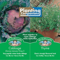 Planting Companions - Cabbage & Thyme Seeds