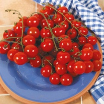 Tomato (Cherry) Sweet Aperitif Seeds