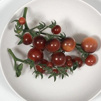 Tomato (Cherry) Indigo Blue Berries Seeds