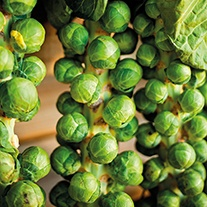 Brussels Sprout Windsor F1 Seeds