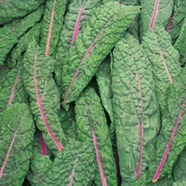Kale Red Devil Seeds