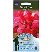 Sweet Pea Scarlet Tunic Seeds