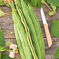 Runner Bean Aurora Seeds