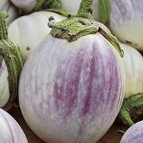 Aubergine Rose Bianca Eggplant Seeds